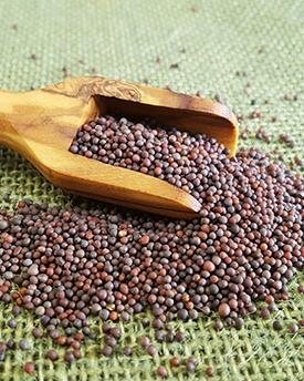 Mustard Seeds  100 gm